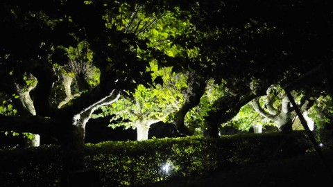 Éclairage-de-parc-07
