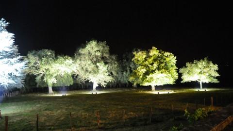 Éclairage-de-parc-23