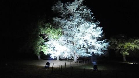 Éclairage-de-parc-24